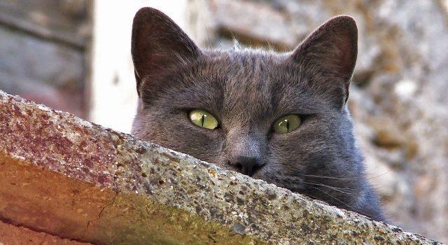 gatto-web